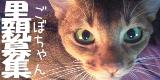 gobo3-ちゃいろい猫。ごぼちゃんの里親募集。