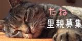 tane3-波平じゃらし、ようやく猫の家で発売。