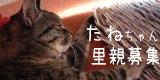 tane4-猫の家6周年。