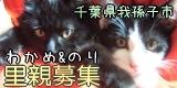 wakametonori_thumb-波平じゃらし、ようやく猫の家で発売。